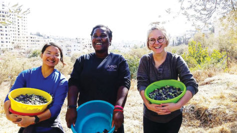 Samatha Ea ('16) and other volunteers pick olives.