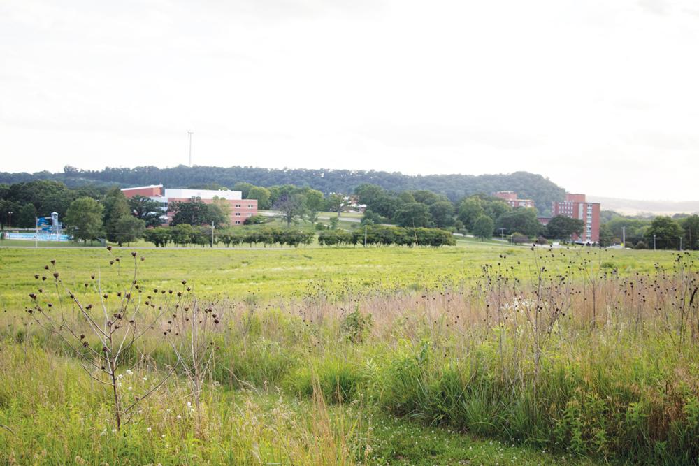 Anderson Prairie in summer 2016.