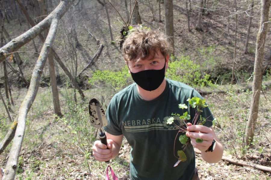 Payton Lott ('23) holds garlic mustard after successfully removing it.